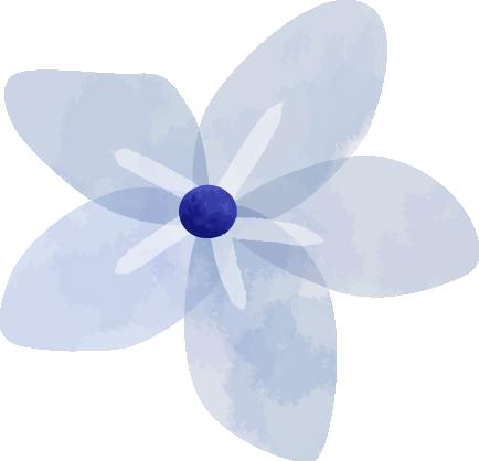 Oxalis Horticulteur